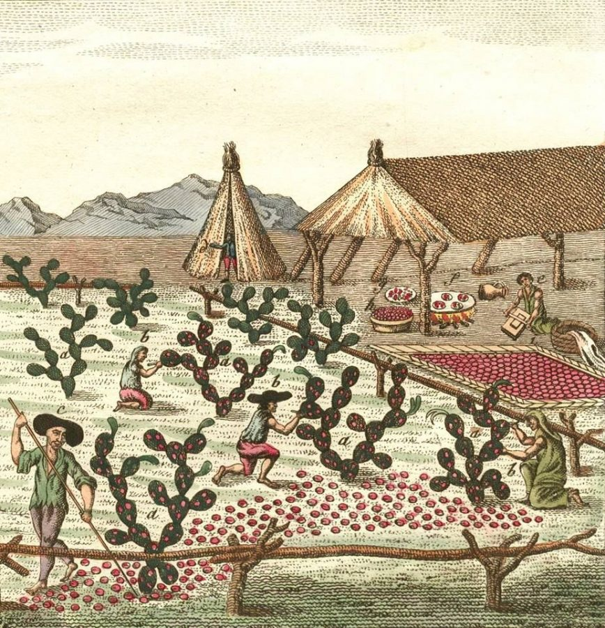 Mexican color. Farmers harvesting cochineal beetles, from Friedrich Johann Bertuch's
